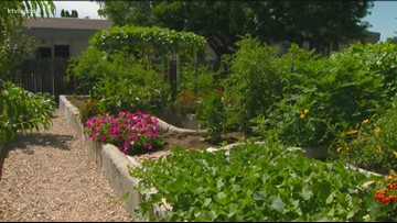 You Can Grow It: Growing enough food to feed your family