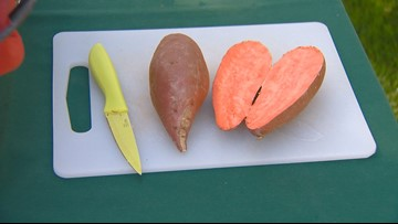 You Can Grow It: Sweet potatoes are easy to grow in your garden or containers