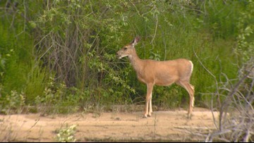 Hunters asked to help battle 'zombie deer disease' from spreading to Idaho