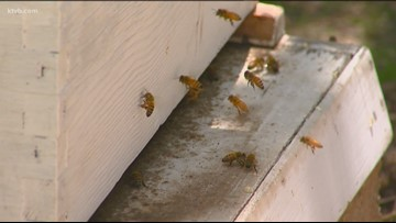 You Can Grow It: The Life of Bees Part 1