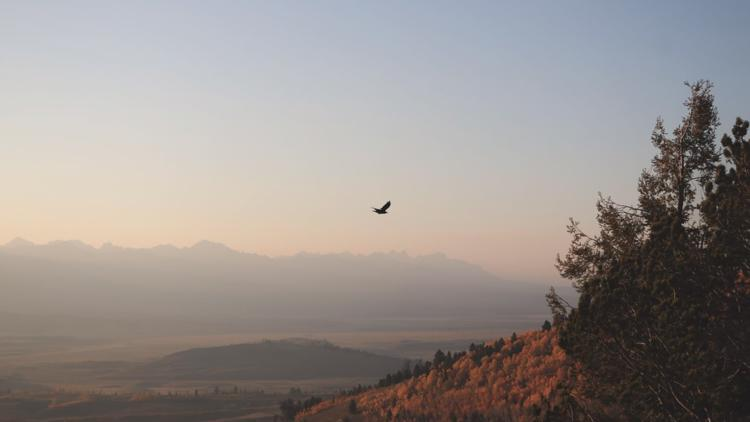 How to cope with Idaho's smoky conditions
