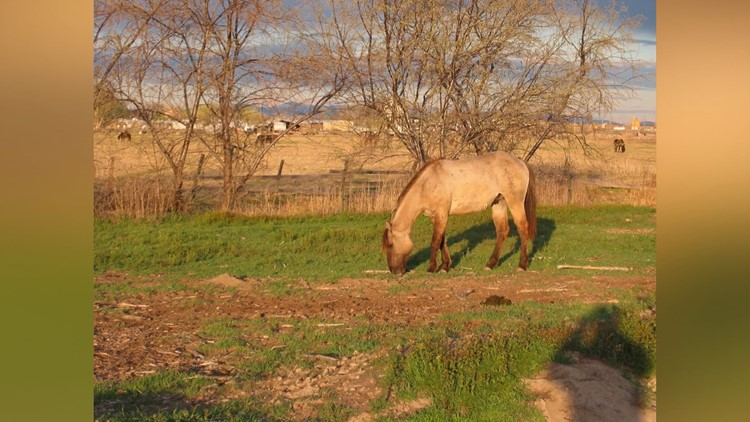 'It was senseless:' Who would shoot and kill a horse in Parma?