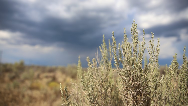 BLM to conduct prescribed burns in Idaho sage-grouse habitat