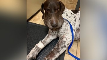 'He started bleeding from his lips and gums': Rattlesnake bites dog south of Kuna