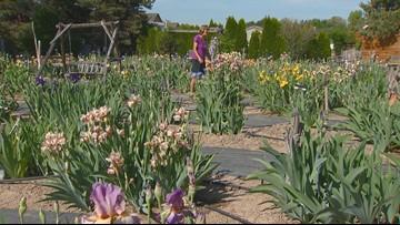 You Can Grow It: Take a trip to JoAnn's Iris Garden in Eagle