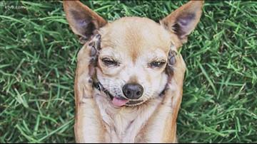 Idaho Life: Boise woman finds niche as 'pho-dog-grapher'