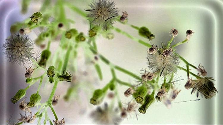 Pollen_generic.jpg