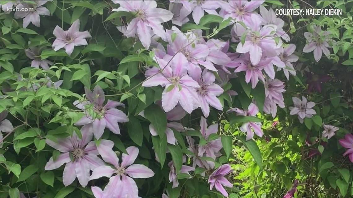 You Can Grow It: Idaho gardeners share their spectacular flower photos