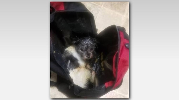Dog found in backpack on road