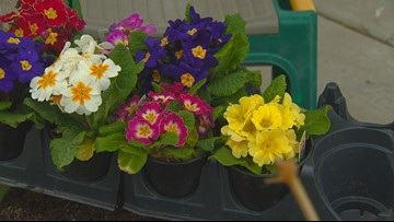 You Can Grow It: How to grow colorful blossoms in the first flowers of spring