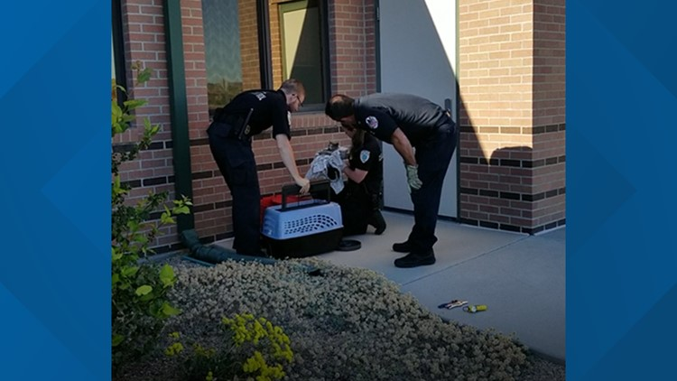 Kitten rescued from engine compartment of Boise woman's car