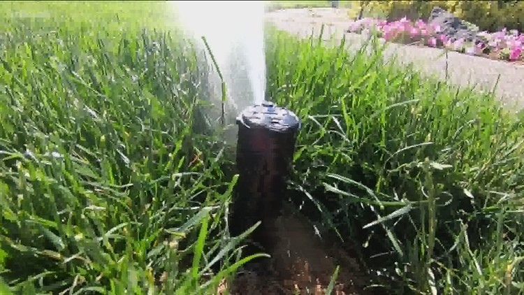You Can Grow It: Watering your lawn wisely