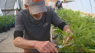 Peek inside a legal pot farm 30 minutes from the Idaho