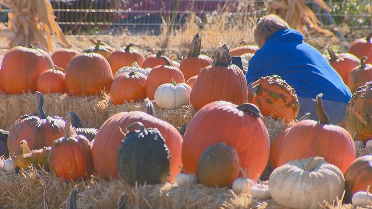 You Can Grow It: Boise firehouse's pumpkin patch will be open Saturday