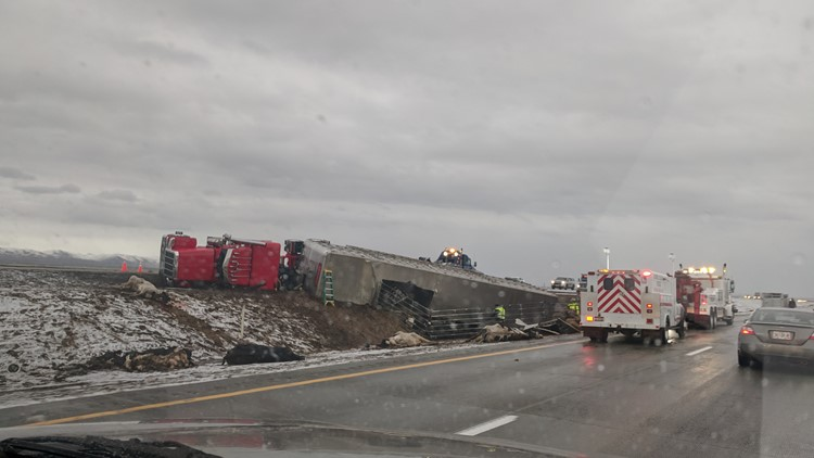 Cattle get loose on I-84 after semi truck crashes east of Boise