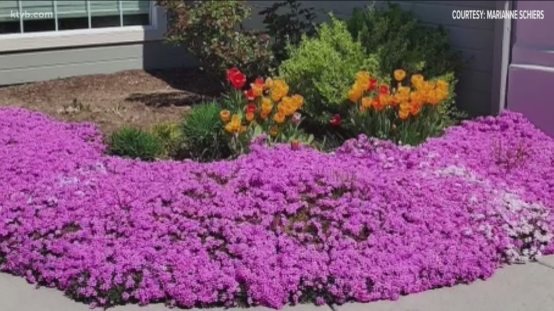 You Can Grow It: Viewers share their photos of spring
