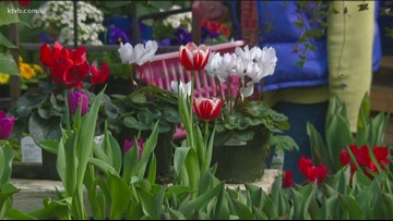 You Can Grow It: Putting a burst of color in spring plantings