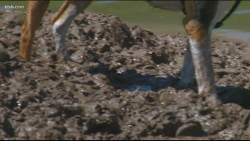 Two weeks after Boise's Dog Island, people complain its too doggone muddy