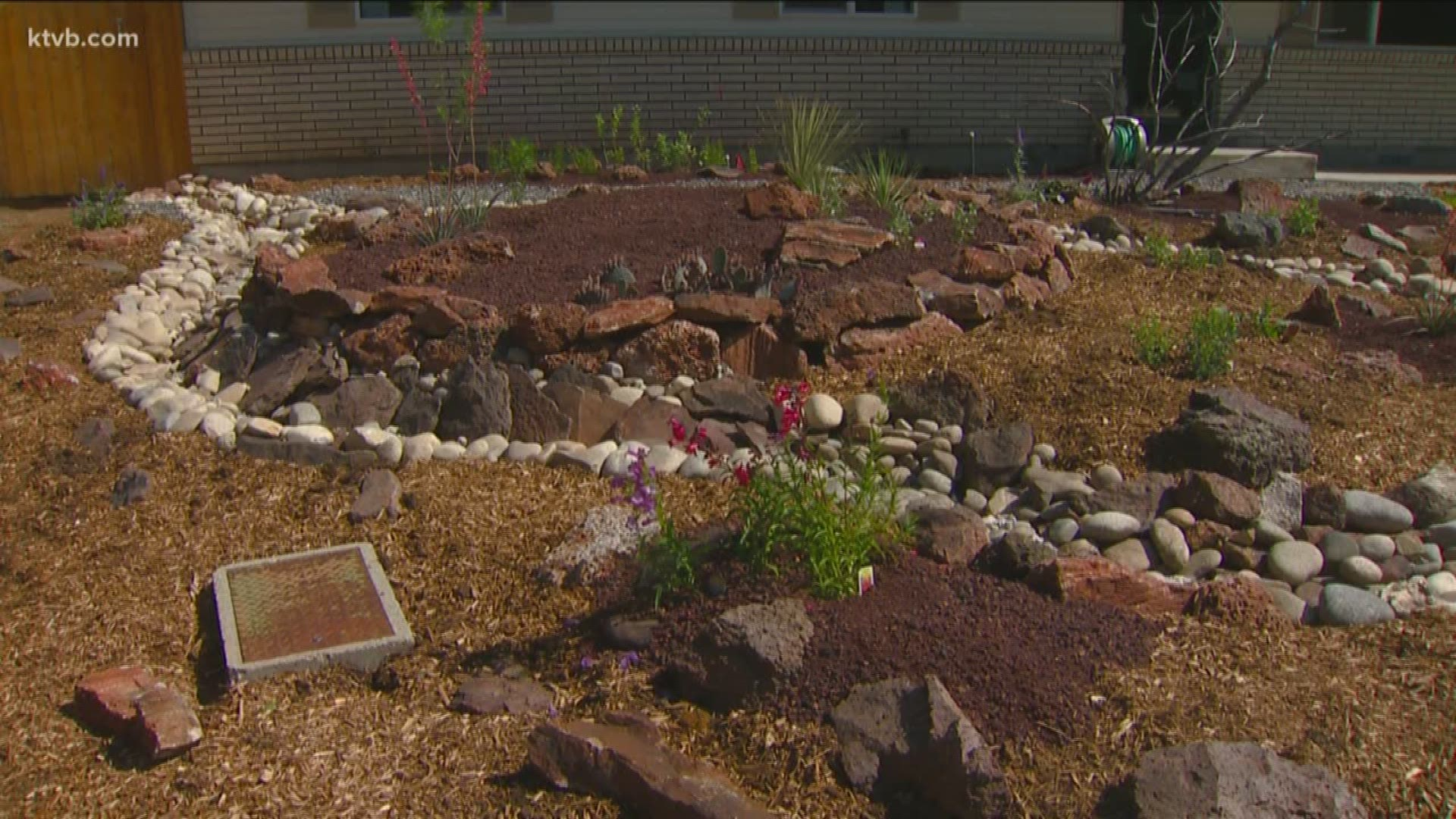 You Can Grow It Xeriscapes Ktvb Com