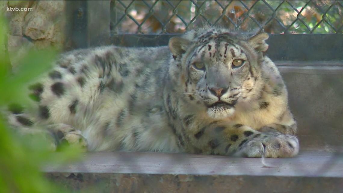 HOWLiday PAWlooza at Zoo Boise on Saturday