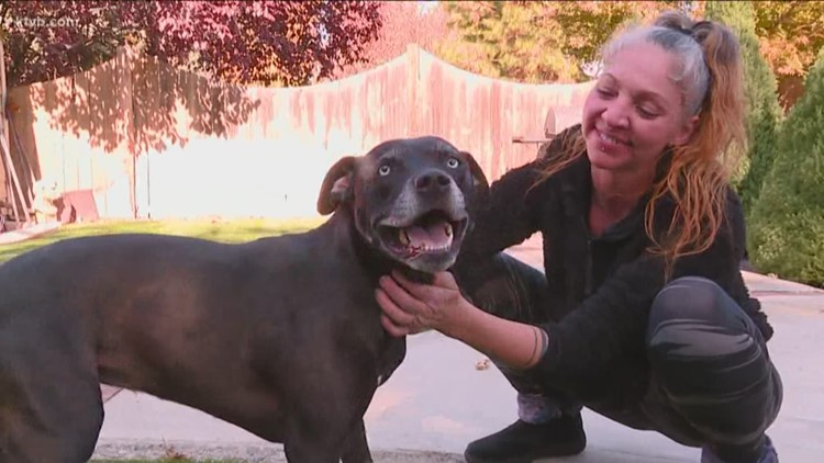 Missing Boise dog returned to owners after wild encounter