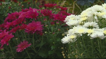 You Can Grow It: Flowering plants that bring color to your garden