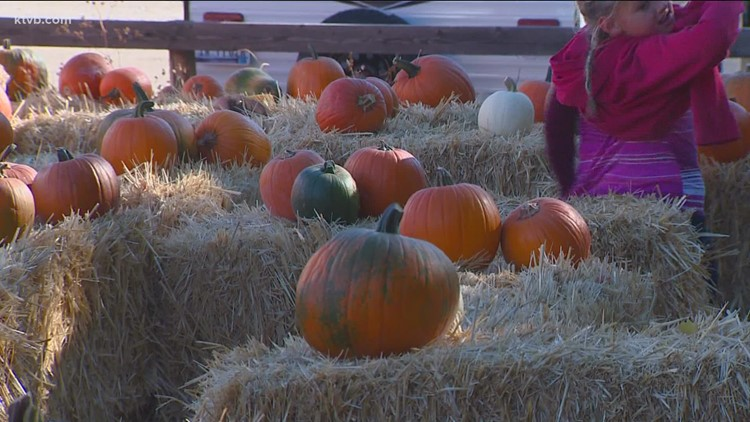 You Can Grow It: Boise firefighters' pumpkin patch