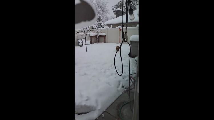 Doggie snow day