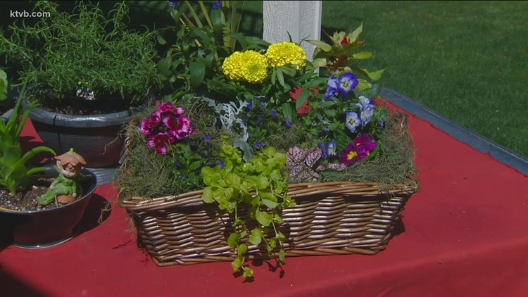 You Can Grow It: Making easy blooming baskets and salad bowls