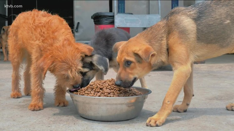 Fuzzy Paws Rescue focuses on hard-to-adopt dogs