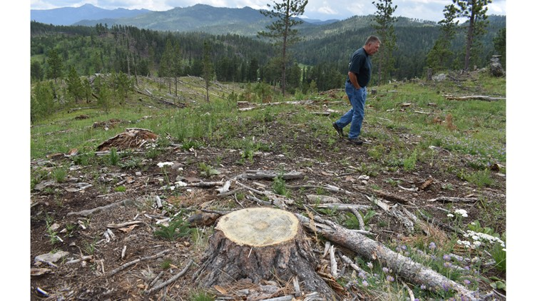 Climate change, logging collide - and a forest shrinks