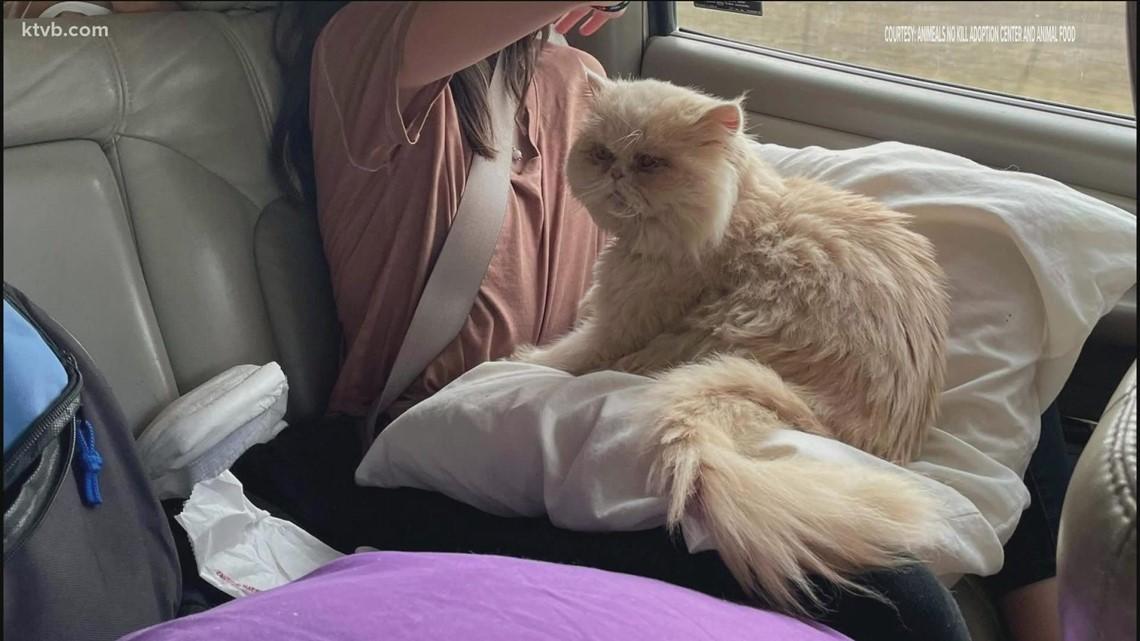 Social media helps reunite Idaho cat with his family