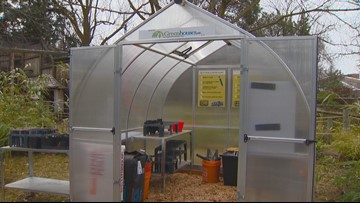 You Can Grow It: Having a greenhouse can extend your growing season