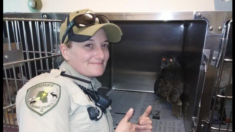 owl rescu 2