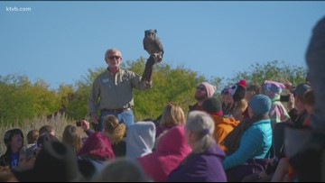 Idaho Life: World Center for Birds of Prey offers up-close encounters with raptors