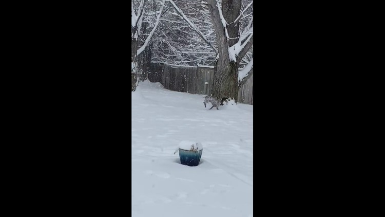 Bailey enjoying the snow