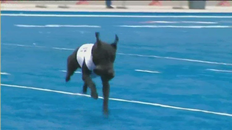 Boise State's tee-fetching dog has passed away