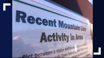 Colorado trail runner kills mountain lion after attack
