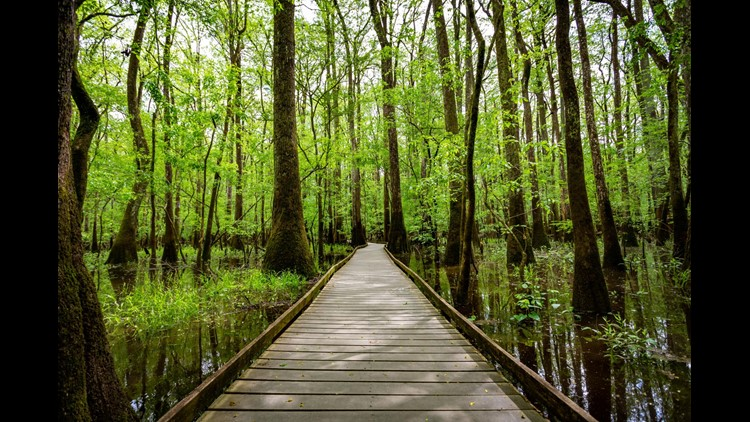 A boardwalk over a marshy floodplain makes up much of the experience of Congaree National Park.(Photo by Jimmy Gray Photo / Shutterstock.com)