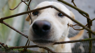 Animal cruelty could become a nationwide felony as 2 Florida lawmakers push bill
