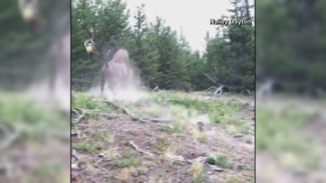 Whoa! Bison tosses young girl into air at Yellowstone National Park